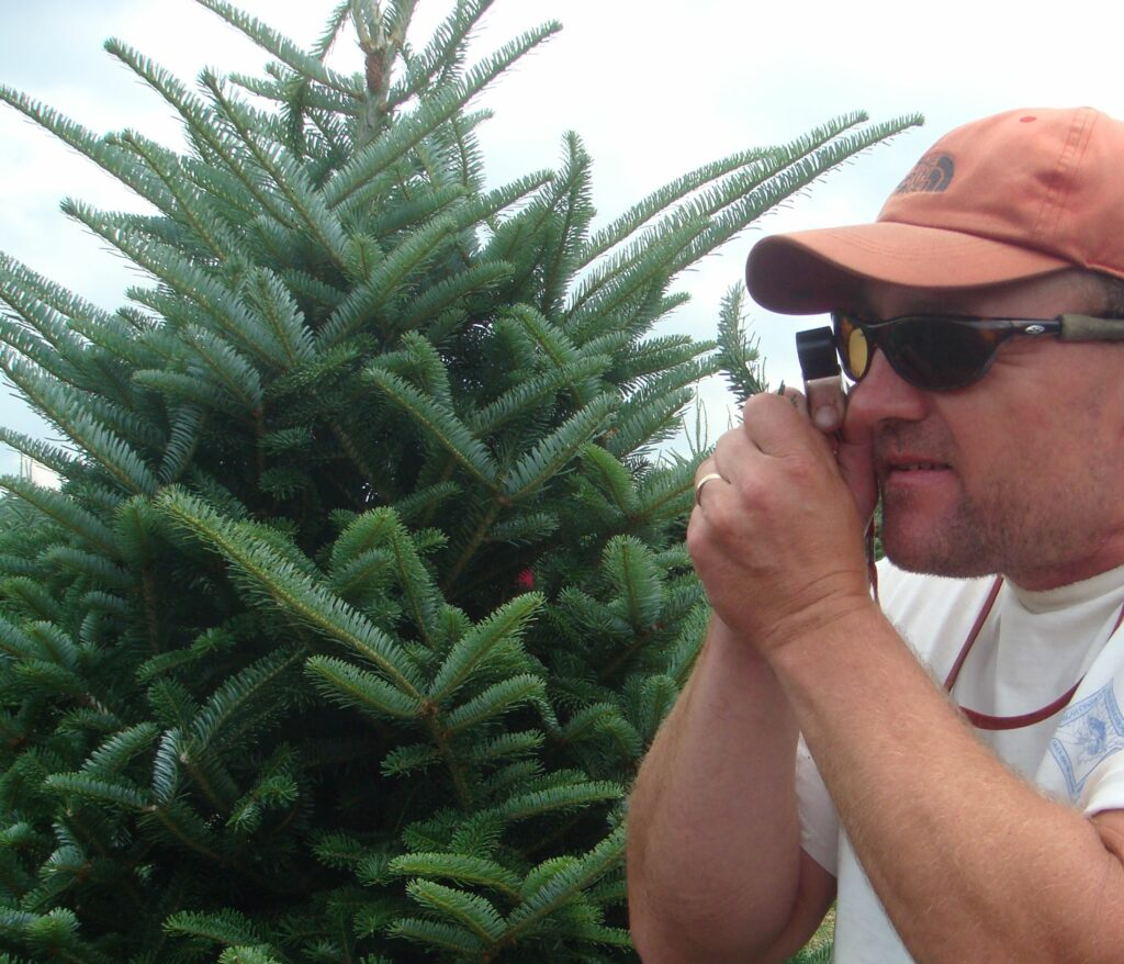 Scout looking at tree shoots with a hand lens to see what pests are present